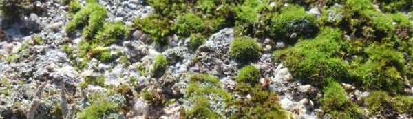 cropped-Lichen-and-Moss.jpg