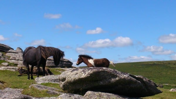 Ponies Sharp Tor 1