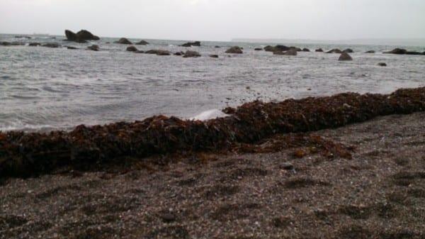 Seaweed Wall