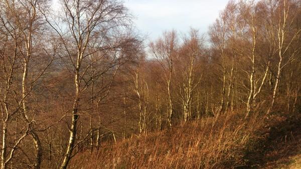 Birches Malvern 1