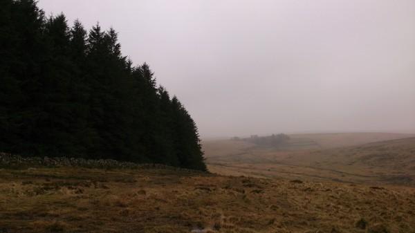 Teignhead Farm Mist