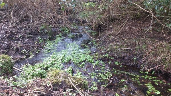 Deeper Marsh Mud
