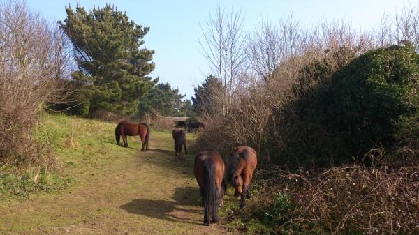 Froward Pony 2