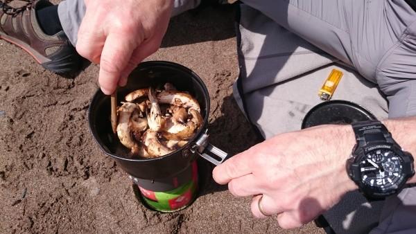 Beach Mushroom May 2016