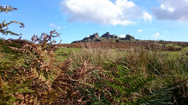 hound-tor-and-bracken