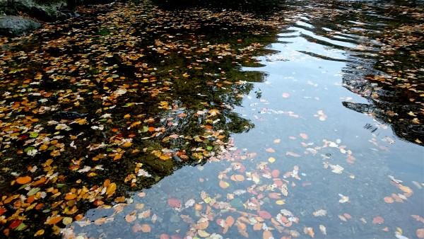 autumn-leaves-river-dart-2