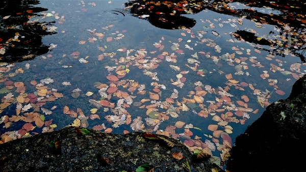 autumn-leaves-river-dart