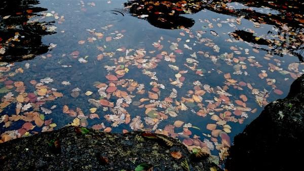 autumn-leaves-river-dart