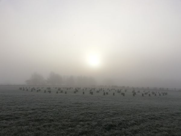 woodhenge in the mist